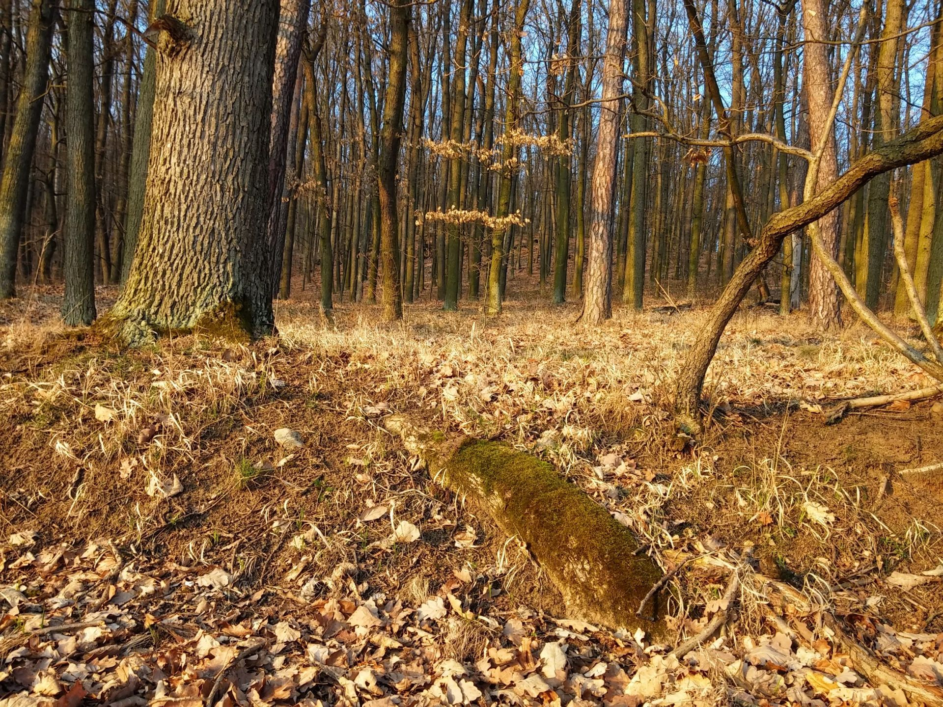 Kácení stromů v místě stavby