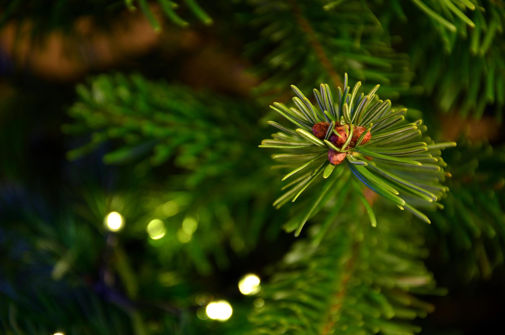 Čas na stromeček