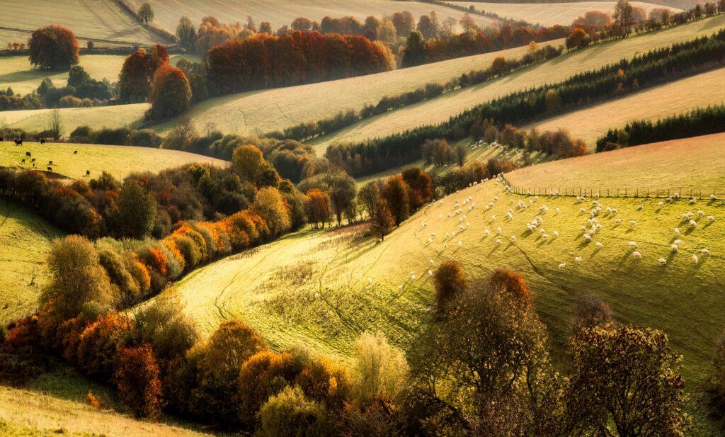 Kopcovitá krajina na podzim